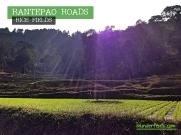 rantepao-rice-fields-2