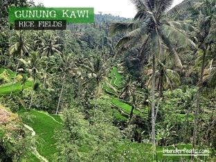 gunung-kawi-rice-fields