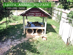 Koh Lanta, Thailand - Lanta Animal Welfare Dogs